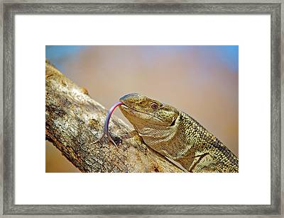 African Reptiles Framed Print by Shannon Benson