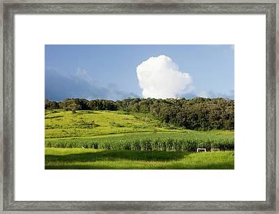 Daintree Rainforest Framed Print