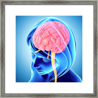 Female Brain Framed Print by Pixologicstudio/science Photo Library