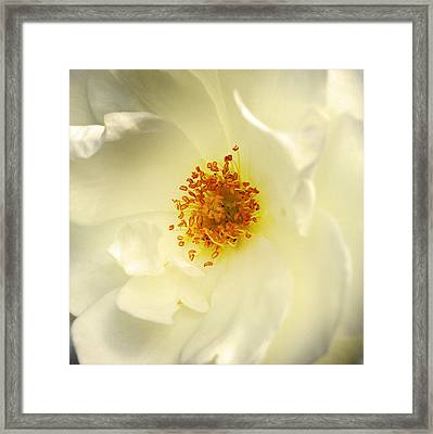 Flower  Framed Print by Les Cunliffe