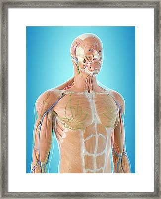 Human Anatomy Framed Print by Sciepro