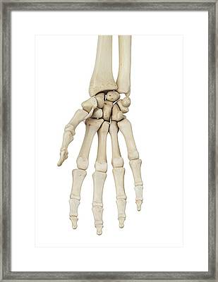Human Hand Anatomy Framed Print by Sciepro