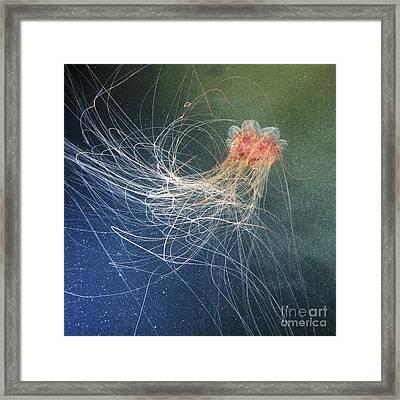 Lions Mane Jellyfish Framed Print by Alexander Semenov