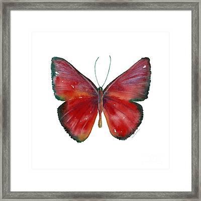 16 Mesene Rubella Butterfly Framed Print