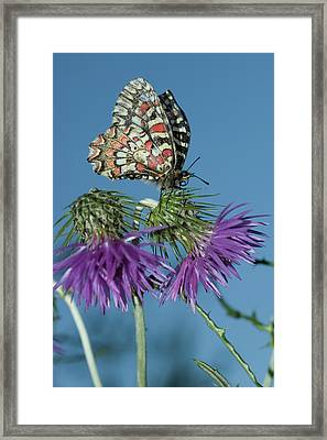 Nature And Travel Images Framed Print by Marcos Veiga