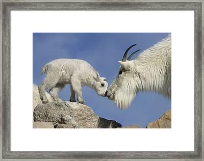 Usa, Colorado, Mount Evans Framed Print by Jaynes Gallery