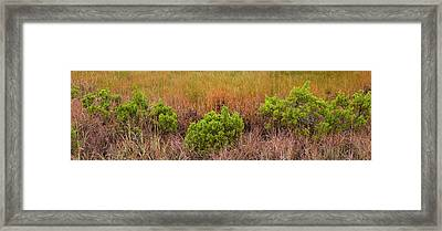 Usa, Texas, Guadalupe Mountains Framed Print by Jaynes Gallery