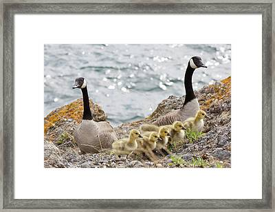 Usa, Washington, San Juan Islands Framed Print by Jaynes Gallery