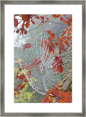 Usa, Washington, Seabeck Framed Print by Jaynes Gallery