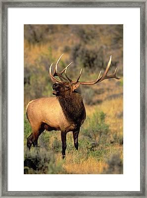 Usa, Wyoming, Yellowstone National Park Framed Print