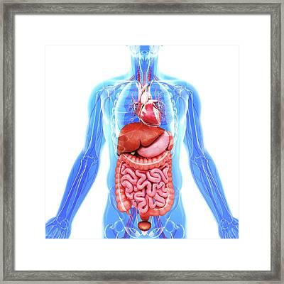 Human Internal Organs Framed Print by Pixologicstudio