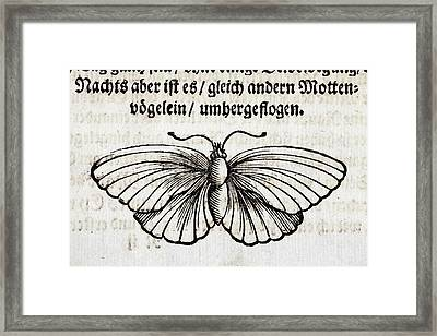 1683 Maria Merian Black Veined White Framed Print by Paul D Stewart