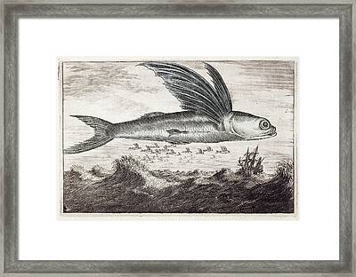 1693 Flying Fish Johan Nieuhof Framed Print