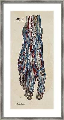 Anatomical Drawing Framed Print by British Library