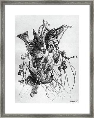 Blackburn Birds, 1895 Framed Print by Granger