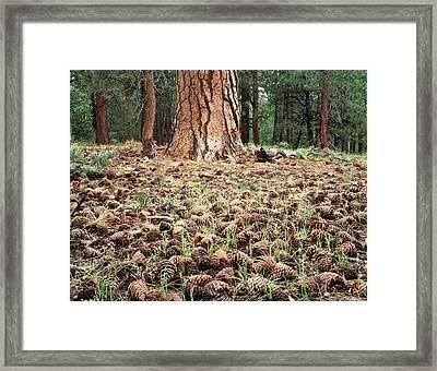California, Sierra Nevada Mountains Framed Print by Christopher Talbot Frank