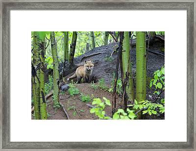 Canada, Quebec, Mount St-bruno Framed Print by Jaynes Gallery
