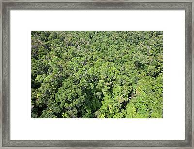 Daintree Rainforest Framed Print by Ashley Cooper