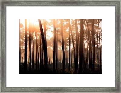Foggy Sunrise At Long Pine Key Framed Print by Jonathan Gewirtz
