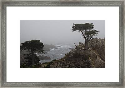 17 Mile Drive Cypress Tree Framed Print by Linda Aiassa