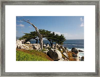 Framed Print featuring the photograph 17 Mile Drive  by Vinnie Oakes