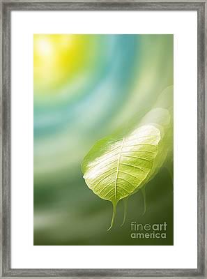 Pho Or Bodhi Framed Print