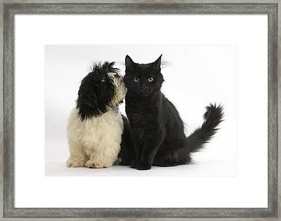 Puppy And Kitten Framed Print by Mark Taylor
