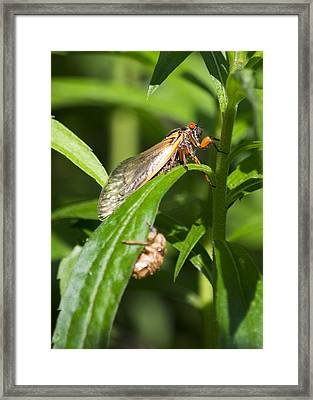Framed Print featuring the photograph 17 Year Itch by Rebecca Sherman