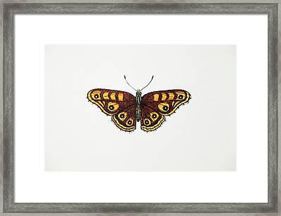 1717 Albin's Hampstead Eye Lost Butterfly Framed Print