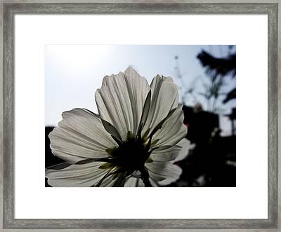 Loveflowers Framed Print by Baljit Chadha