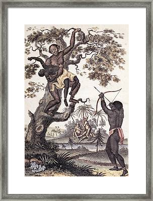 1795 Ape Abducts Woman Sibly Chimp Orang Framed Print by Paul D Stewart