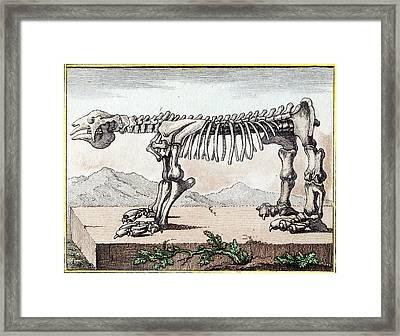 1799 Bru Megatherium Skeleton Early Color Framed Print by Paul D Stewart
