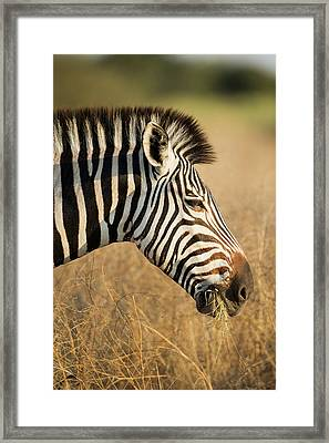 Africa, Botswana, Moremi Game Reserve Framed Print