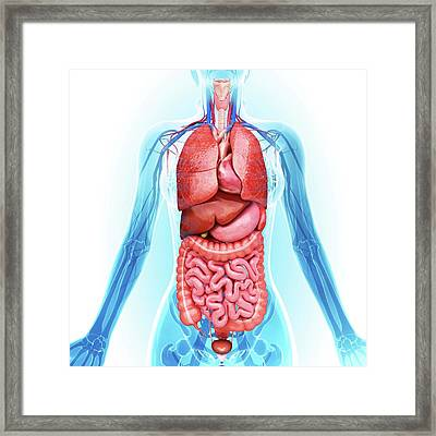 Human Internal Organs Framed Print by Pixologicstudio