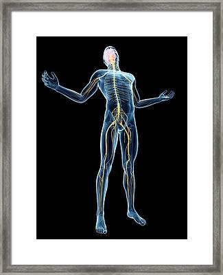 Human Nervous System Framed Print
