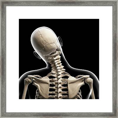 Human Skull And Neck Bones Framed Print by Sebastian Kaulitzki