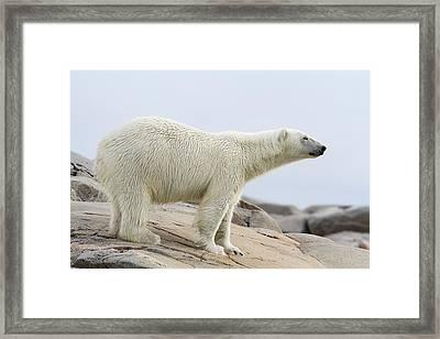 Norway, Svalbard Framed Print by Jaynes Gallery
