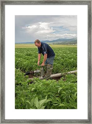 Potato Farming Framed Print by Jim West
