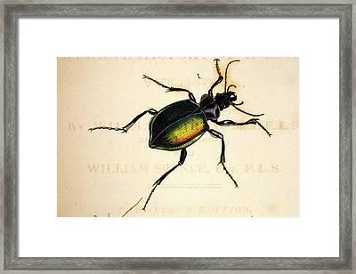 1818 Kirby Spence Carabid Beetle Frontis Framed Print by Paul D Stewart