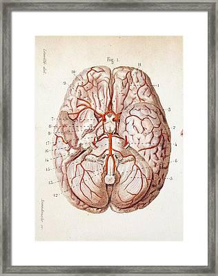 1840 Historical Image Brain Blood Supply Framed Print