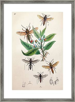 1845 Obadiah Westwood Insect Painting Framed Print