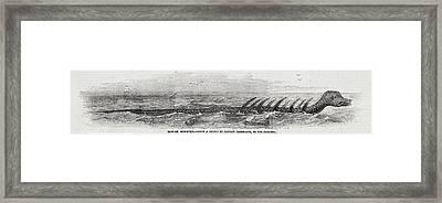 1856 Princess Many-finned Sea Monster Framed Print by Paul D Stewart
