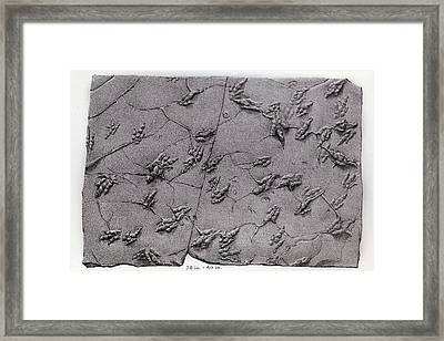 1858 Dinosaur Tracks Ichnology Hitchcock Framed Print