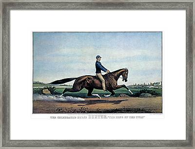 1860s The Celebrated Horse Dexter King Framed Print