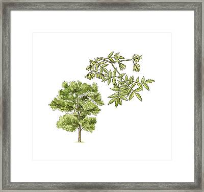 Untitled Framed Print by Science Photo Library