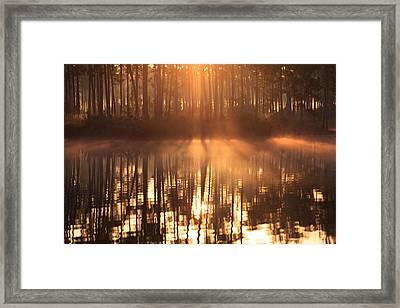 Foggy Sunrise At Long Pine Key Framed Print