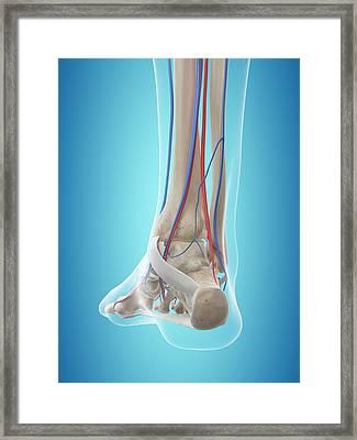 Human Vascular System Framed Print by Sciepro