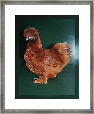 19. Red Silkie Hen Framed Print