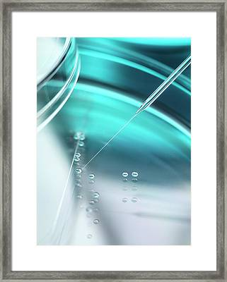 Stem Cell Research Framed Print by Tek Image