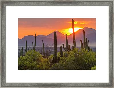 Usa, Arizona, Saguaro National Park Framed Print by Jaynes Gallery